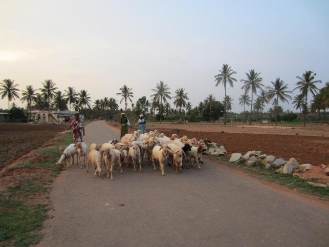 reddy-halli-chnenrayapatna-devnahalli