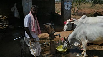Basava Camp -water for bulls_20150422