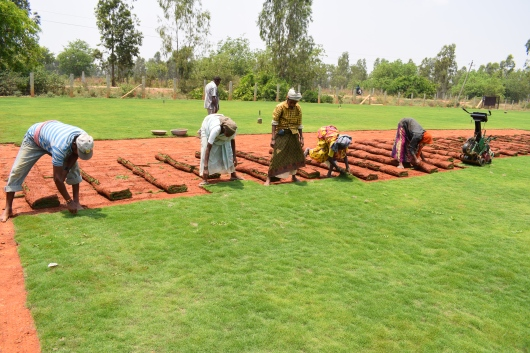 Small Farm Dynamics in India